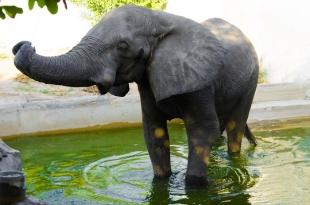 Elefante del Zoológico de Barranquilla volverá al dentista